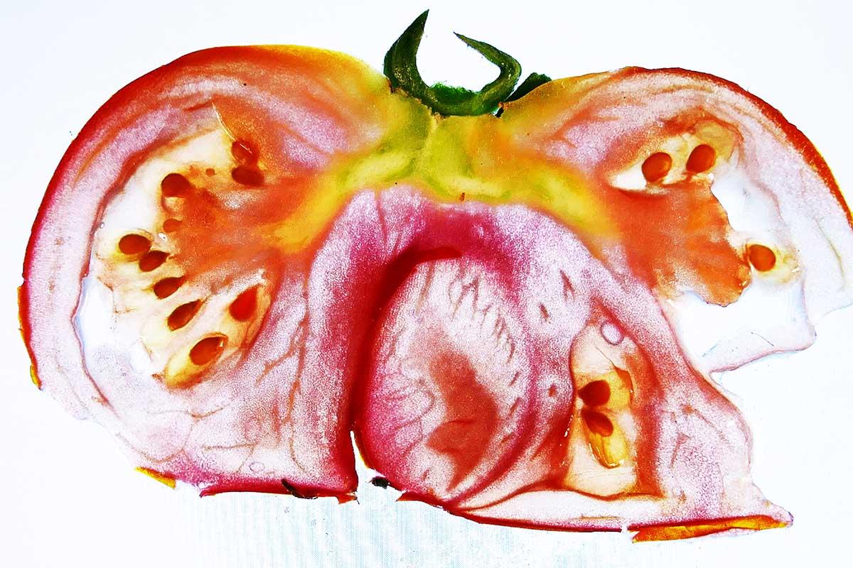 tomaten-3-klein