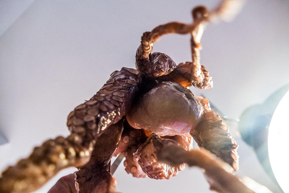der Pulpo, wie ihn das Gemüse sieht - pulpo